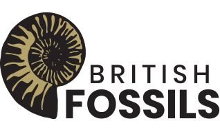 Gold and Black Fossil with British Fossils text